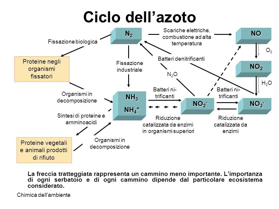Chimica dell'ambiente H2OH2O Riduzione catalizzata da enzimi Batteri ni- trificanti Riduzione catalizzata da enzimi in organismi superiori Ciclo della