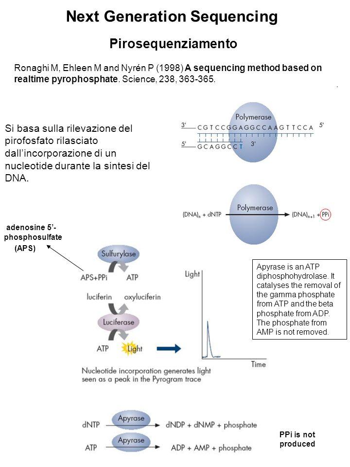 Pirosequenziamento Si basa sulla rilevazione del pirofosfato rilasciato dallincorporazione di un nucleotide durante la sintesi del DNA. Ronaghi M, Ehl