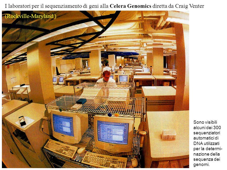 I laboratori per il sequenziamento di geni alla Celera Genomics diretta da Craig Venter (Rockville-Maryland ) Sono visibili alcuni dei 300 sequenziatori automatici di DNA utilizzati per la determi- nazione della sequenza dei genomi.