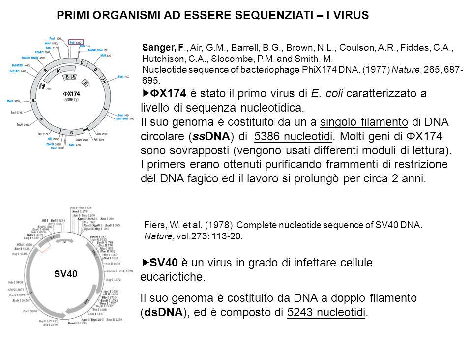 ΦX174 è stato il primo virus di E.coli caratterizzato a livello di sequenza nucleotidica.