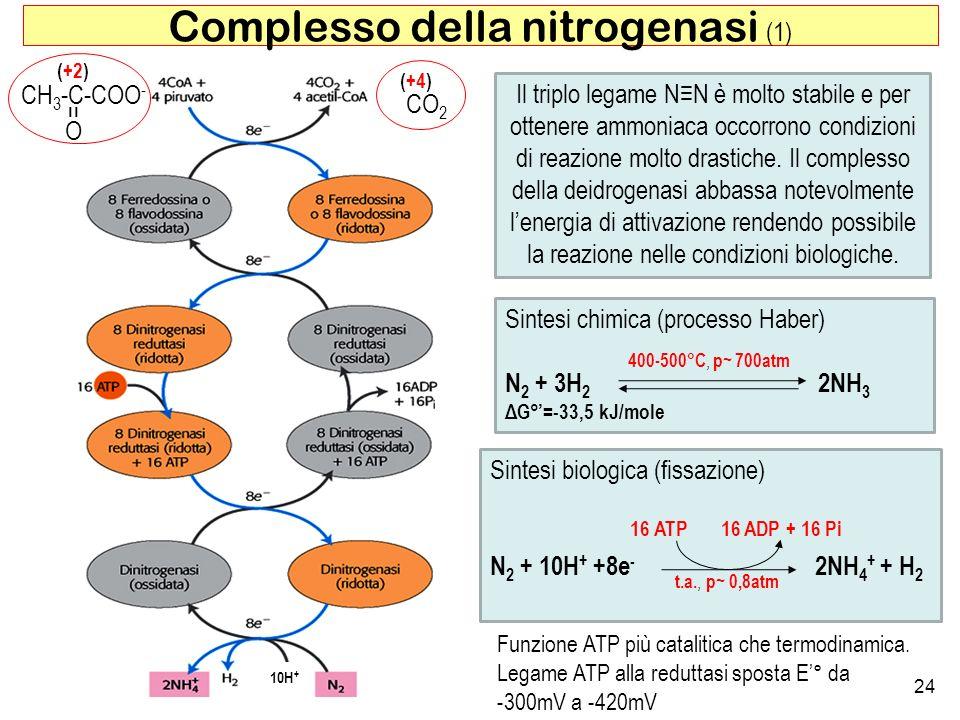 Sintesi chimica (processo Haber) N 2 + 3H 2 2NH 3 ΔG°=-33,5 kJ/mole 24 Complesso della nitrogenasi (1) CH 3 -C-COO - O = (+2) CO 2 (+4) Sintesi biolog