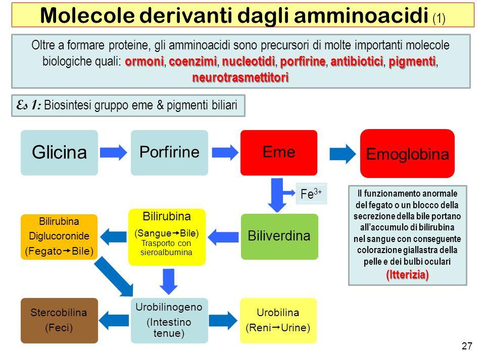 27 Molecole derivanti dagli amminoacidi (1) ormonicoenzimi nucleotidi porfirineantibiotici pigmenti neurotrasmettitori Oltre a formare proteine, gli a