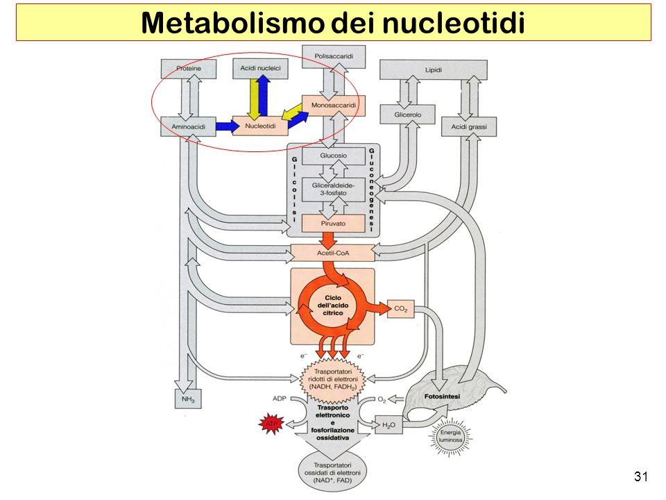 31 Metabolismo dei nucleotidi