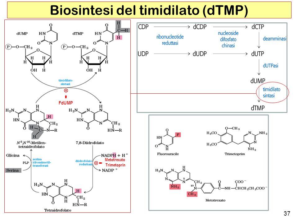 37 Biosintesi del timidilato (dTMP) FdUMP Metotrexato Trimetoprin