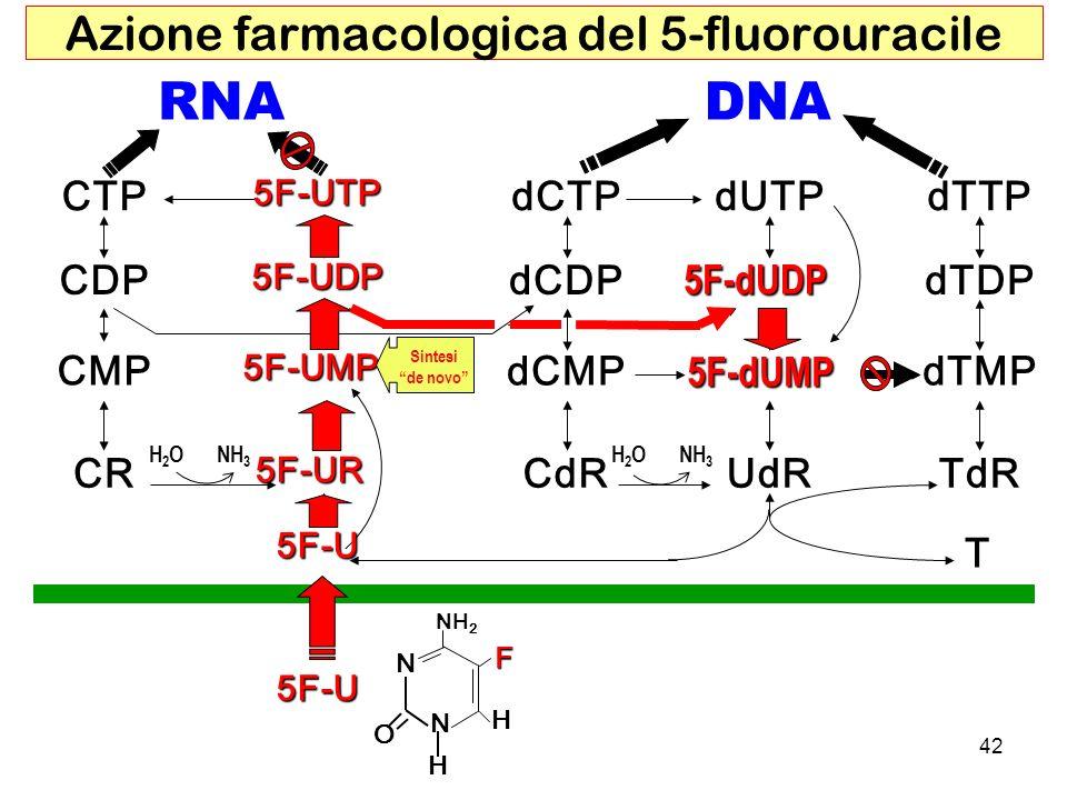 RNADNA CTPdCTP CMP dCMP dCDP dUTP dTMP dTDP dTTP CDP CRCdRUdRTdR T H2OH2ONH 3 H2OH2O NH 2 H N N O H F 5F-U 5F-U 5F-UR 5F-UMP 5F-UDP 5F-UTP 5F-dUDP 5F-