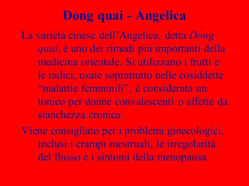 Dong quai - Angelica La varietà cinese dellAngelica, detta Dong quai, è uno dei rimedi più importanti della medicina orientale. Si utilizzano i frutti