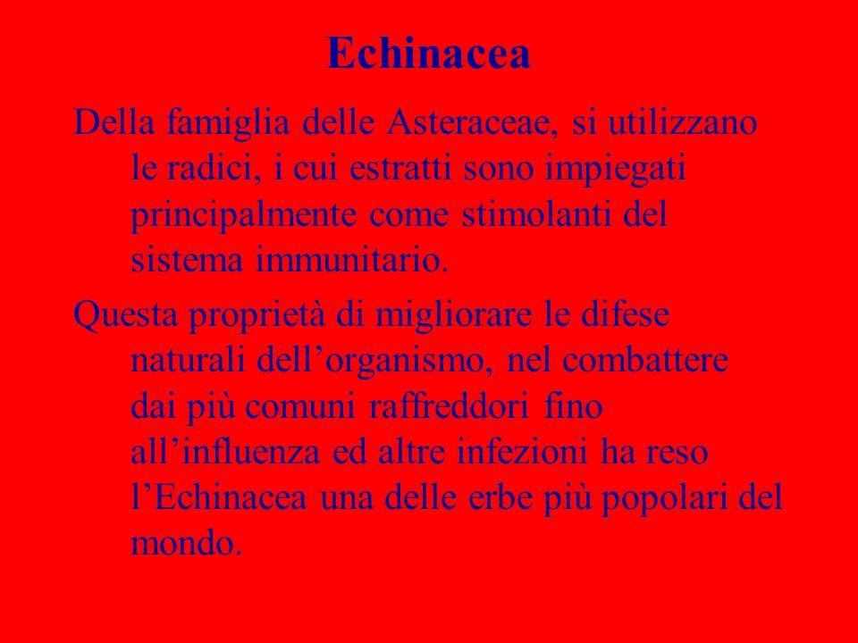 Echinacea Della famiglia delle Asteraceae, si utilizzano le radici, i cui estratti sono impiegati principalmente come stimolanti del sistema immunitar