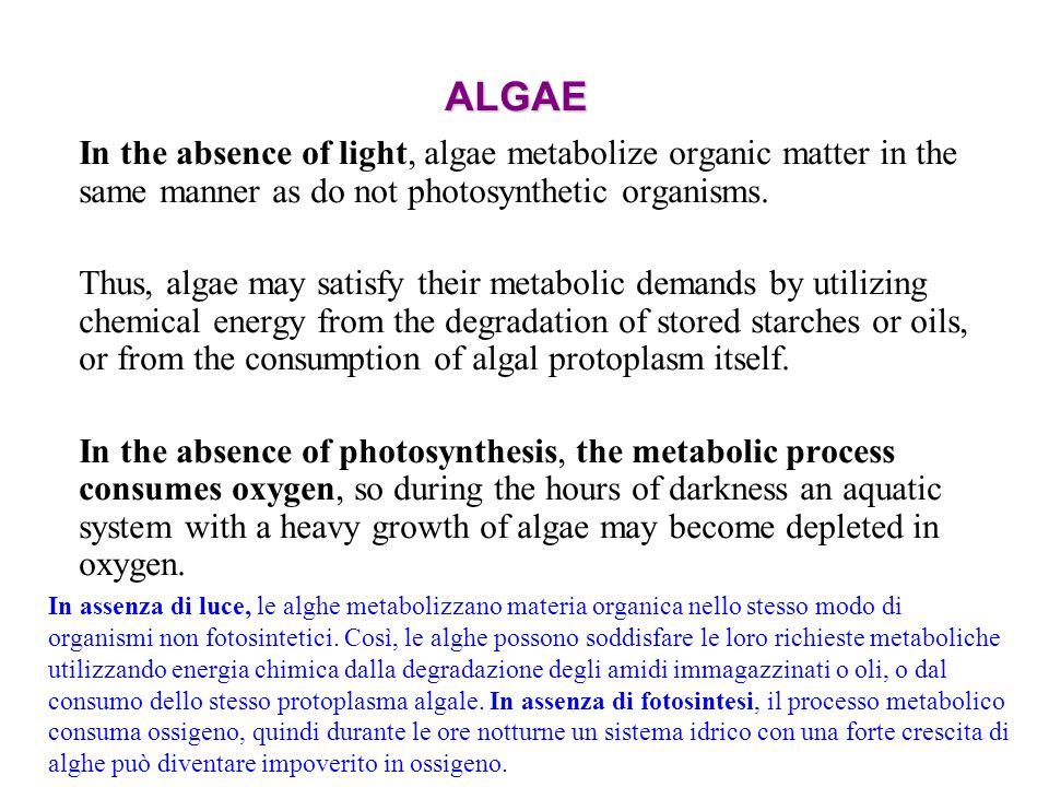 ALGAE In the absence of light, algae metabolize organic matter in the same manner as do not photosynthetic organisms. Thus, algae may satisfy their me