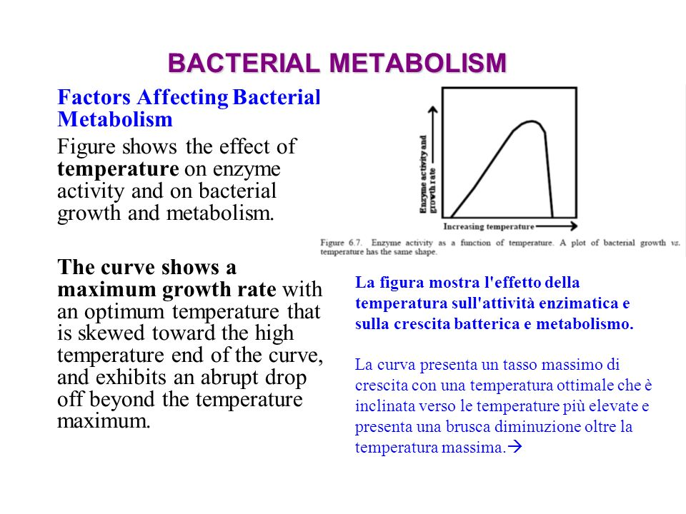 BACTERIAL METABOLISM Factors Affecting Bacterial Metabolism Figure shows the effect of temperature on enzyme activity and on bacterial growth and meta