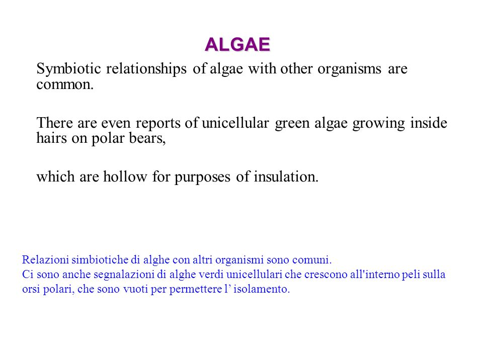 ALGAE Symbiotic relationships of algae with other organisms are common. There are even reports of unicellular green algae growing inside hairs on pola