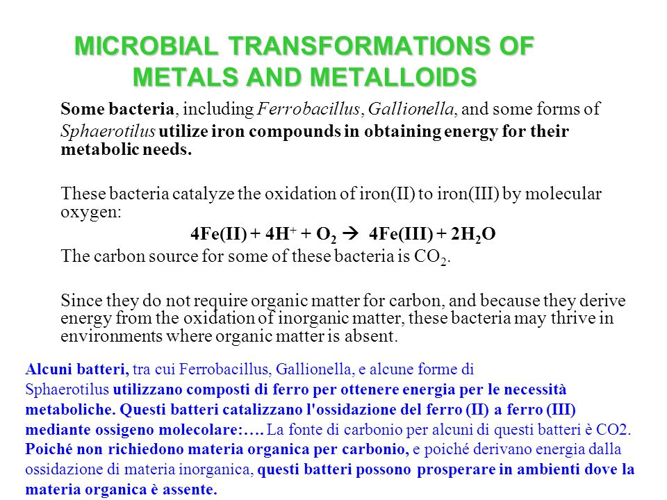 MICROBIAL TRANSFORMATIONS OF METALS AND METALLOIDS Some bacteria, including Ferrobacillus, Gallionella, and some forms of Sphaerotilus utilize iron co