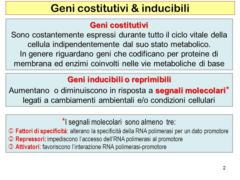 2 Geni costitutivi & inducibili Geni costitutivi Sono costantemente espressi durante tutto il ciclo vitale della cellula indipendentemente dal suo sta