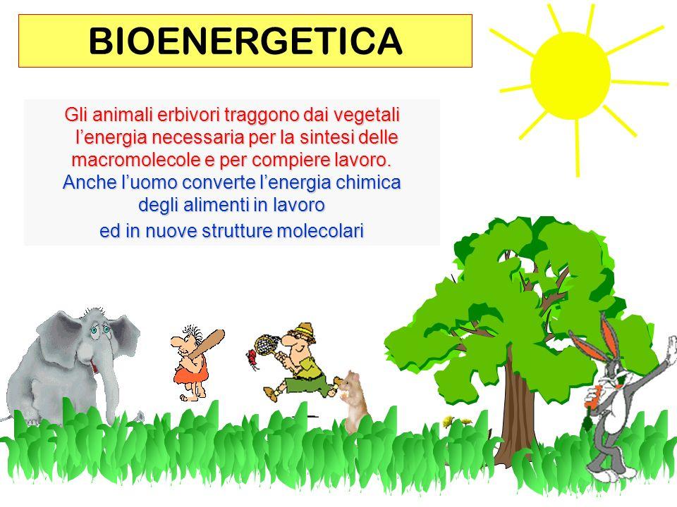 101 Gli animali erbivori traggono dai vegetali lenergia necessaria per la sintesi delle lenergia necessaria per la sintesi delle macromolecole e per compiere lavoro.