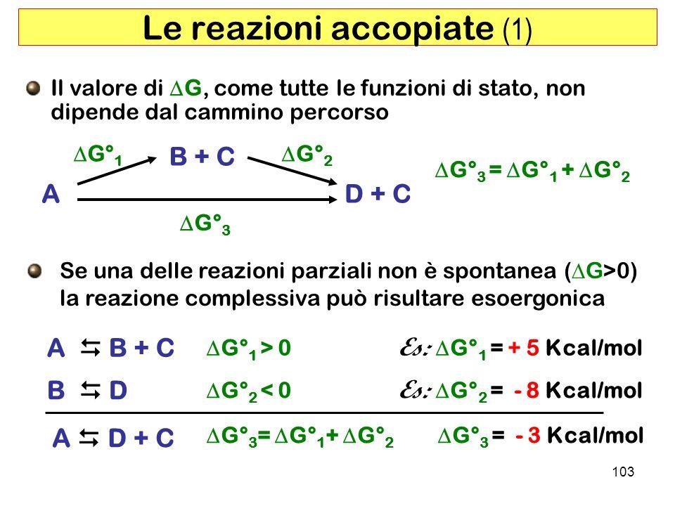 103 Le reazioni accopiate (1) Il valore di G, come tutte le funzioni di stato, non dipende dal cammino percorso A B + C D + C G° 1 G° 3 G° 2 G° 3 = G° 1 + G° 2 B D Se una delle reazioni parziali non è spontanea ( G>0) la reazione complessiva può risultare esoergonica A B + C G° 1 > 0 Es: G° 1 = + 5 Kcal/mol G° 2 < 0 Es: G° 2 = - 8 Kcal/mol A D + C G° 3 = G° 1 + G° 2 G° 3 = - 3 Kcal/mol