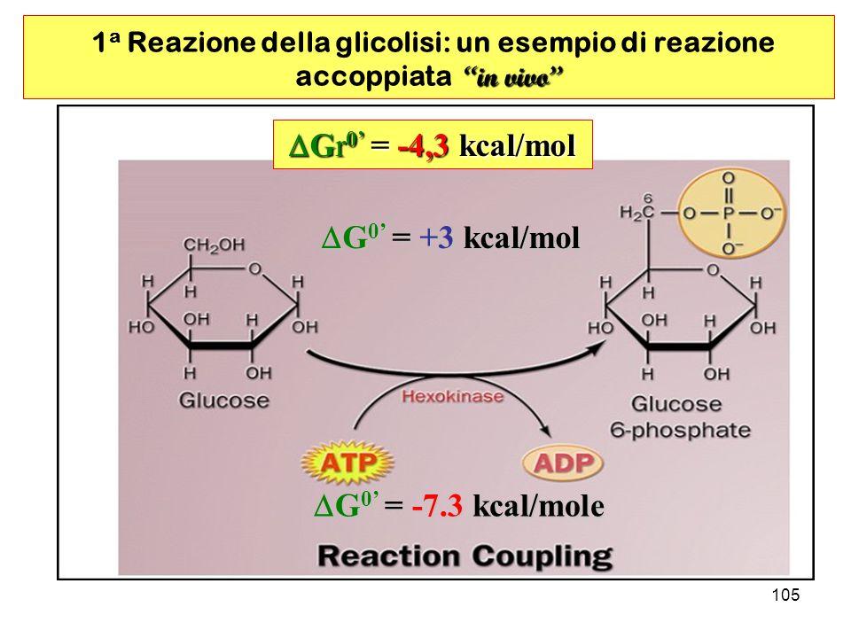 105 G0 = -7.3 kcal/mole G0 = +3 kcal/mol in vivo 1 a Reazione della glicolisi: un esempio di reazione accoppiata in vivo Gr0 = -4,3 kcal/mol
