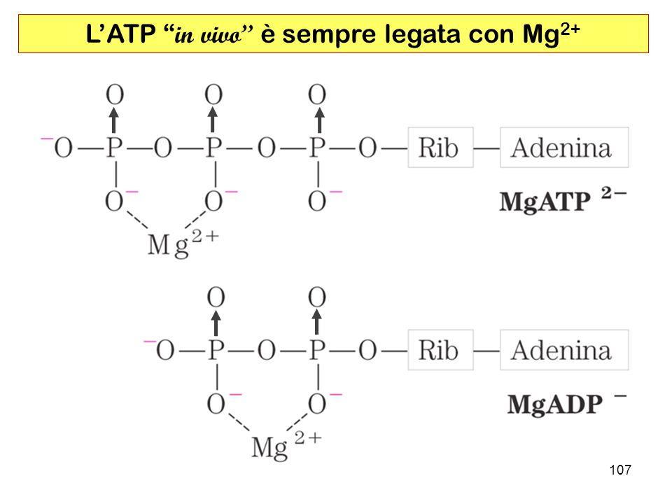 107 LATP in vivo è sempre legata con Mg 2+