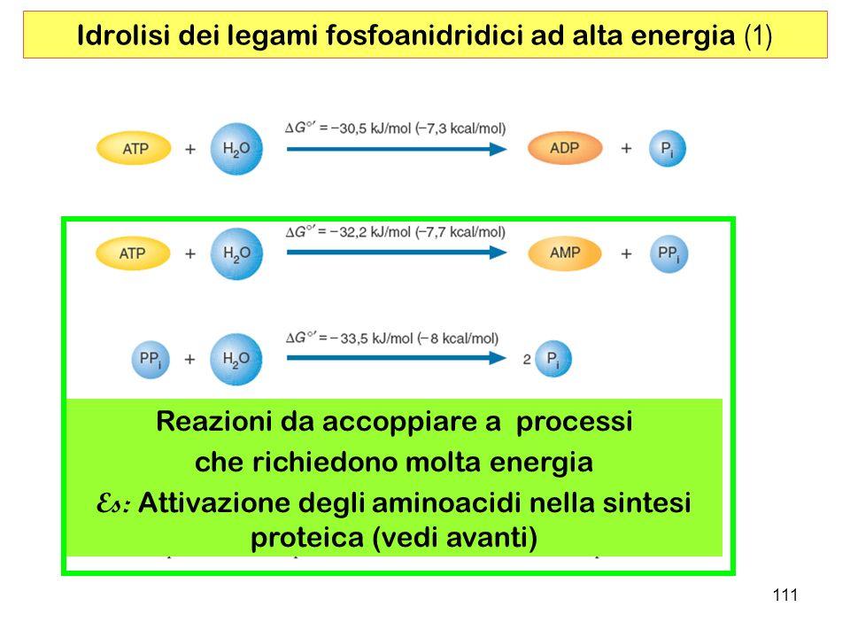 111 Idrolisi dei legami fosfoanidridici ad alta energia (1) Reazioni da accoppiare a processi che richiedono molta energia Es: Attivazione degli aminoacidi nella sintesi proteica (vedi avanti)