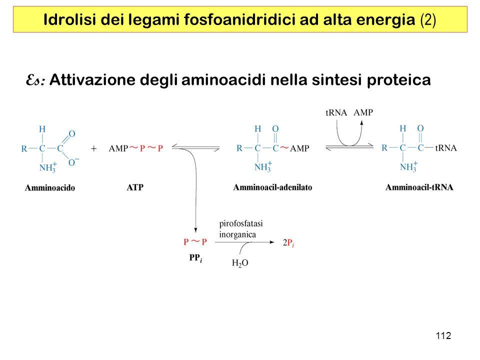112 Es: Attivazione degli aminoacidi nella sintesi proteica Idrolisi dei legami fosfoanidridici ad alta energia (2)