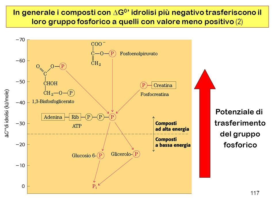 117 In generale i composti con G 0 idrolisi più negativo trasferiscono il loro gruppo fosforico a quelli con valore meno positivo (2) Potenziale di trasferimento del gruppo fosforico