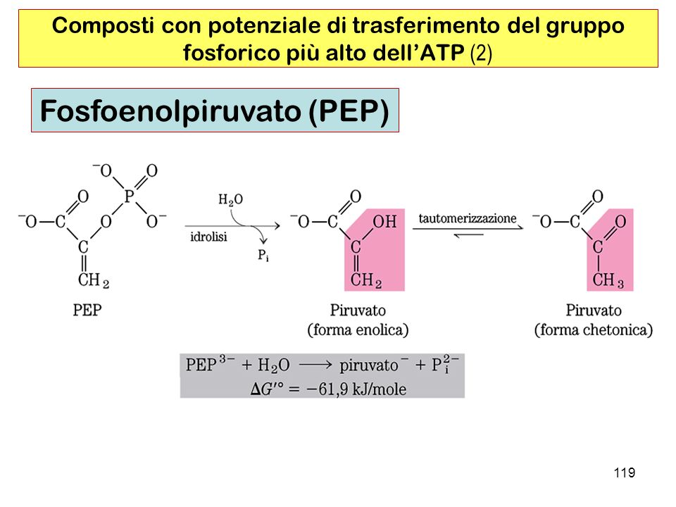 119 Composti con potenziale di trasferimento del gruppo fosforico più alto dellATP (2) Fosfoenolpiruvato (PEP)