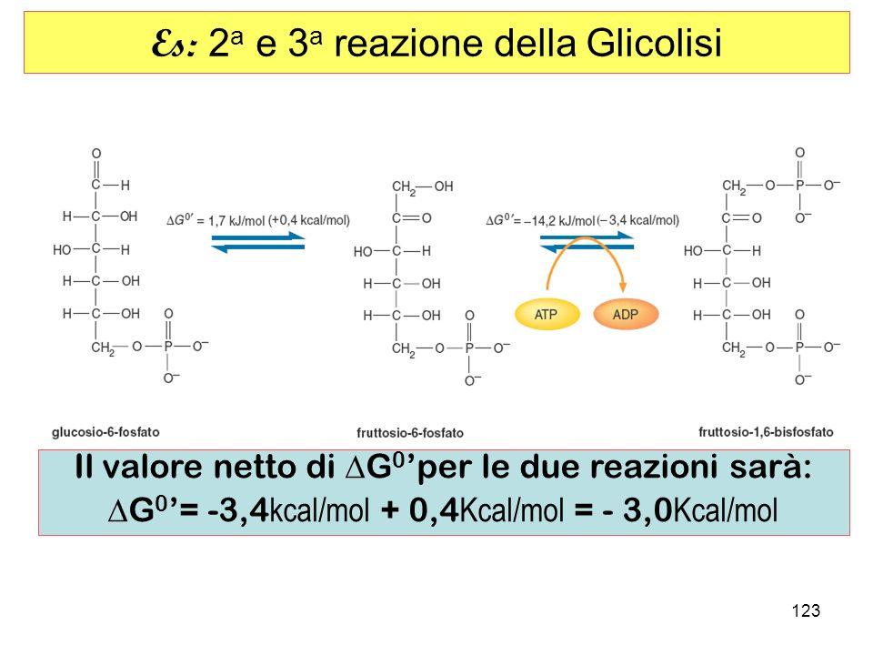 123 Es: 2 a e 3 a reazione della Glicolisi Il valore netto di G 0 per le due reazioni sarà: G 0 = -3,4 kcal/mol + 0,4 Kcal/mol = - 3,0 Kcal/mol
