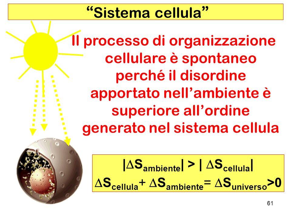 61 Sistema cellula Il processo di organizzazione cellulare è spontaneo perché il disordine apportato nellambiente è superiore allordine generato nel sistema cellula | S ambiente | > | S cellula | S cellula + S ambiente = S universo >0