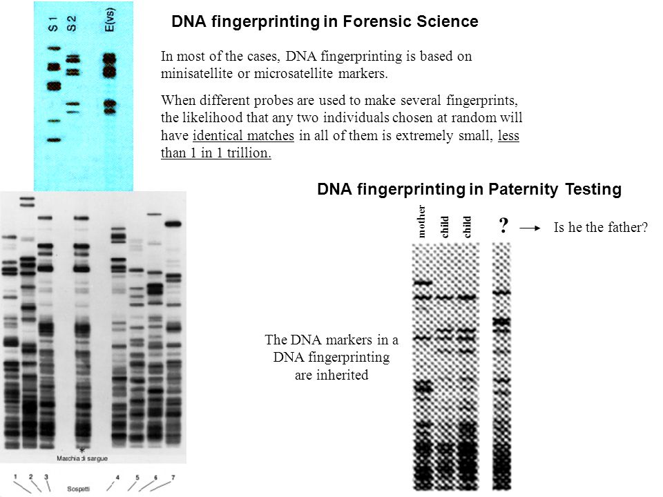 DNA fingerprinting in Forensic Science In most of the cases, DNA fingerprinting is based on minisatellite or microsatellite markers. When different pr