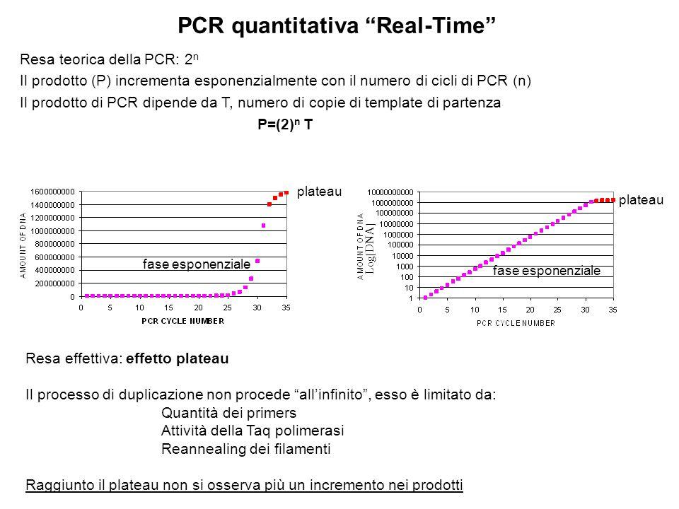 PCR quantitativa Real-Time Resa teorica della PCR: 2 n Il prodotto (P) incrementa esponenzialmente con il numero di cicli di PCR (n) Il prodotto di PC