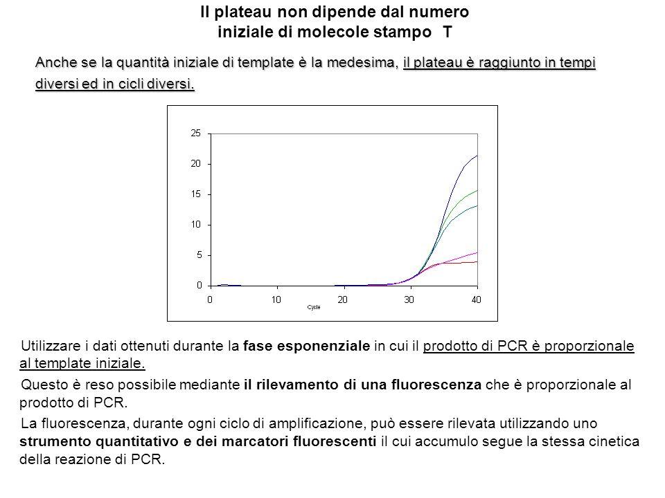 Il plateau non dipende dal numero iniziale di molecole stampo T Anche se la quantità iniziale di template è la medesima, il plateau è raggiunto in tem