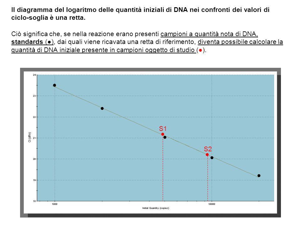 Il diagramma del logaritmo delle quantità iniziali di DNA nei confronti dei valori di ciclo-soglia è una retta. Ciò significa che, se nella reazione e