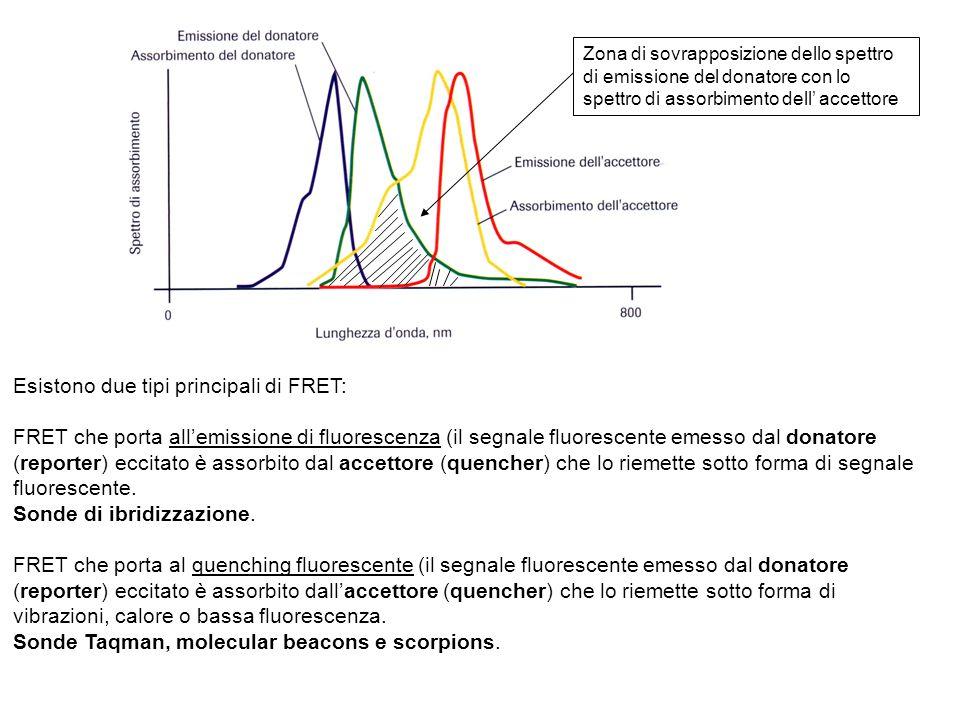 Esistono due tipi principali di FRET: FRET che porta allemissione di fluorescenza (il segnale fluorescente emesso dal donatore (reporter) eccitato è a