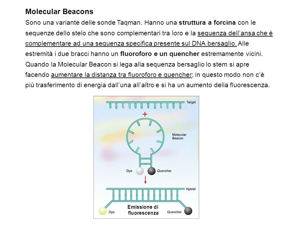 Molecular Beacons Sono una variante delle sonde Taqman. Hanno una struttura a forcina con le sequenze dello stelo che sono complementari tra loro e la
