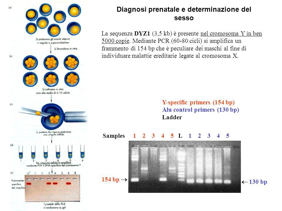 Diagnosi prenatale e determinazione del sesso La sequenza DYZ1 (3,5 kb) è presente nel cromosoma Y in ben 5000 copie. Mediante PCR (60-80 cicli) si am