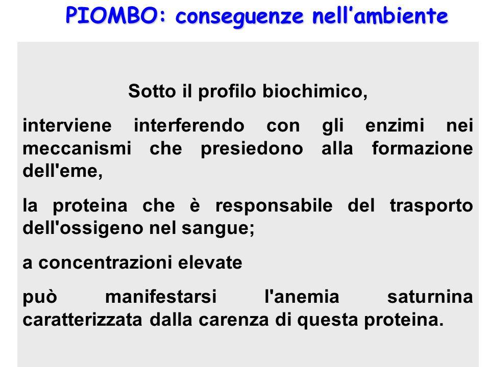 PIOMBO: conseguenze nellambiente La maggior parte del piombo assunto dall'uomo, inizialmente, è presente nel sangue dove raggiunge una concentrazione