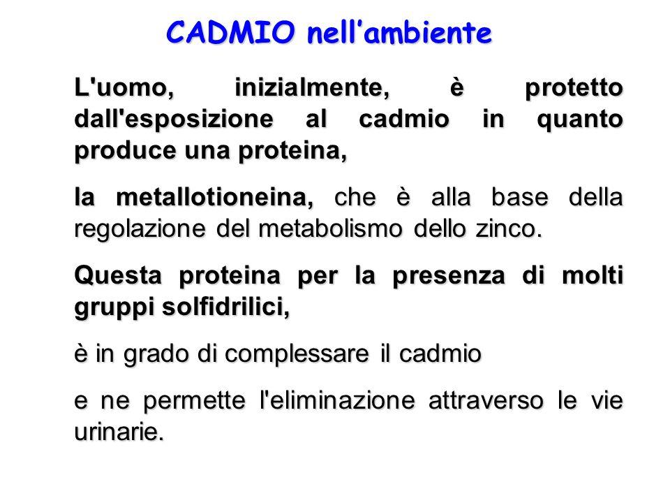CADMIO nellambiente L'uomo, inizialmente, è protetto dall'esposizione al cadmio in quanto produce una proteina, la metallotioneina, che è alla base de