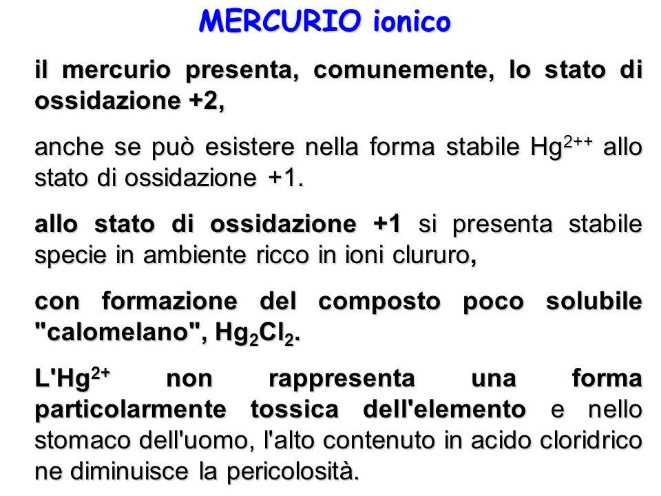 MERCURIO ionico il mercurio presenta, comunemente, lo stato di ossidazione +2, anche se può esistere nella forma stabile Hg 2++ allo stato di ossidazi