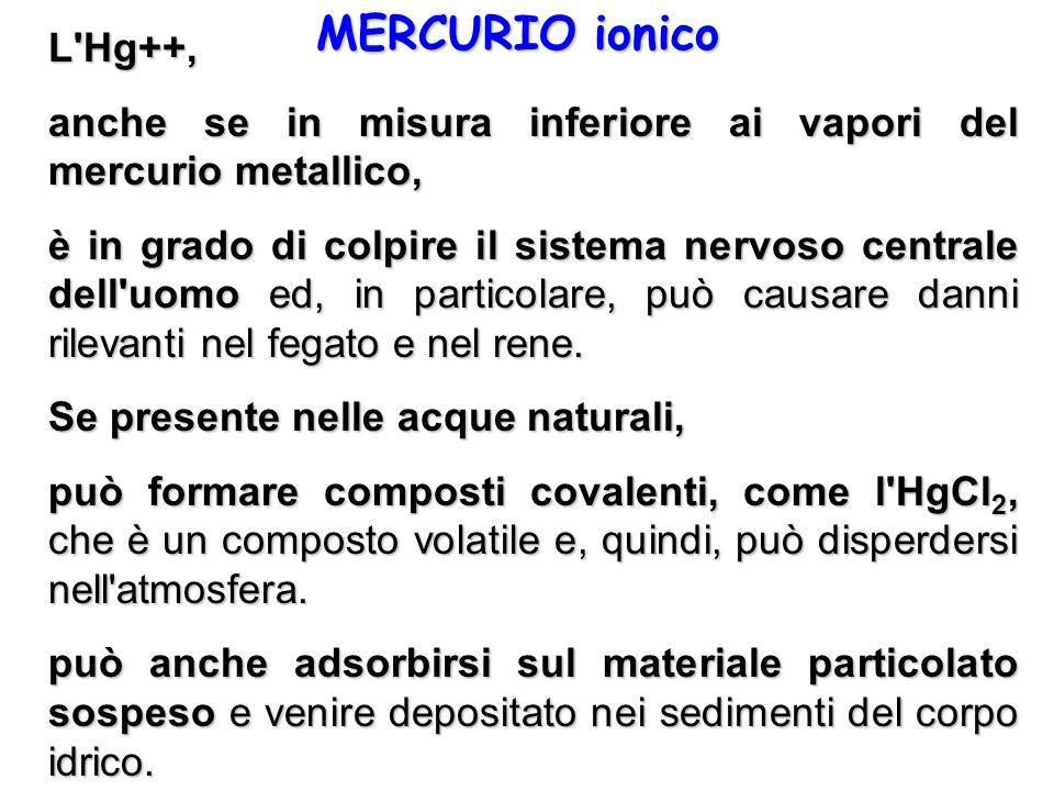 MERCURIO ionico L'Hg++, anche se in misura inferiore ai vapori del mercurio metallico, è in grado di colpire il sistema nervoso centrale dell'uomo ed,