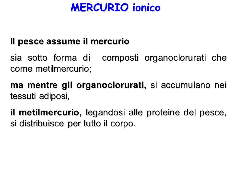 MERCURIO ionico Il pesce assume il mercurio sia sotto forma di composti organoclorurati che come metilmercurio; ma mentre gli organoclorurati, si accu