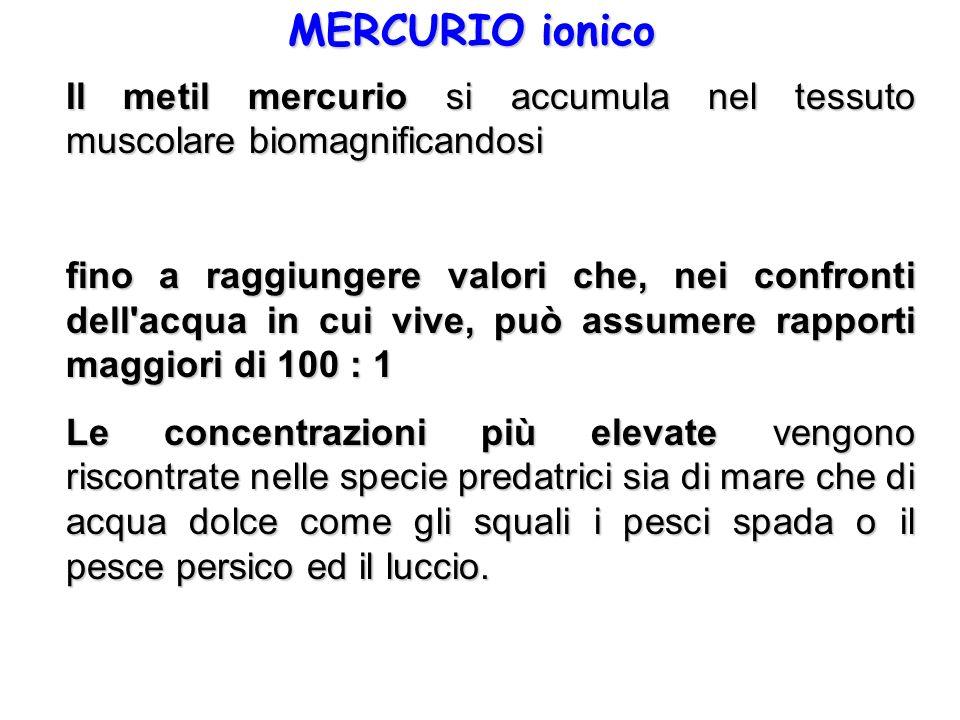 MERCURIO ionico Il metil mercurio si accumula nel tessuto muscolare biomagnificandosi fino a raggiungere valori che, nei confronti dell'acqua in cui v