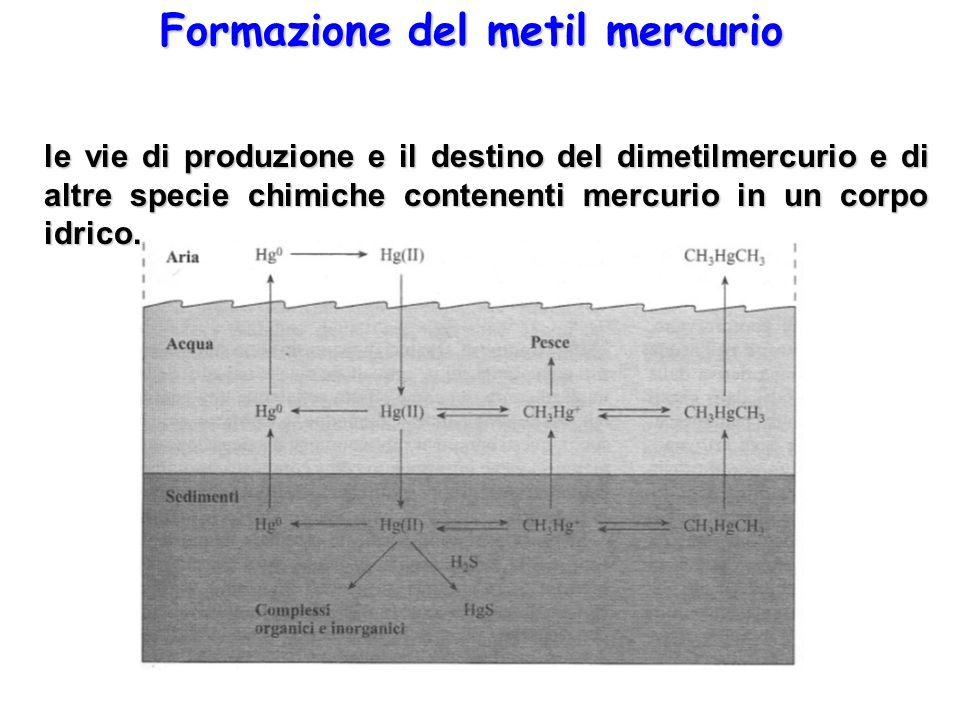 Formazione del metil mercurio le vie di produzione e il destino del dimetilmercurio e di altre specie chimiche contenenti mercurio in un corpo idrico.