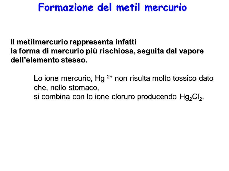 Formazione del metil mercurio Il metilmercurio rappresenta infatti la forma di mercurio più rischiosa, seguita dal vapore dell'elemento stesso. Lo ion