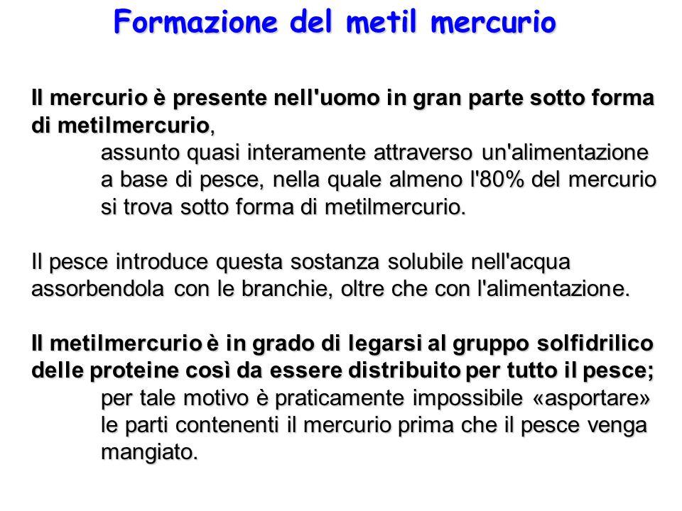 Formazione del metil mercurio Il mercurio è presente nell'uomo in gran parte sotto forma di metilmercurio, assunto quasi interamente attraverso un'ali