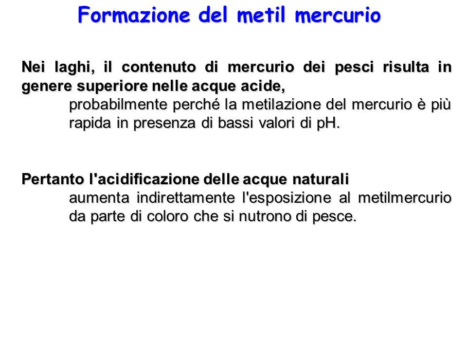 Formazione del metil mercurio Nei laghi, il contenuto di mercurio dei pesci risulta in genere superiore nelle acque acide, probabilmente perché la met