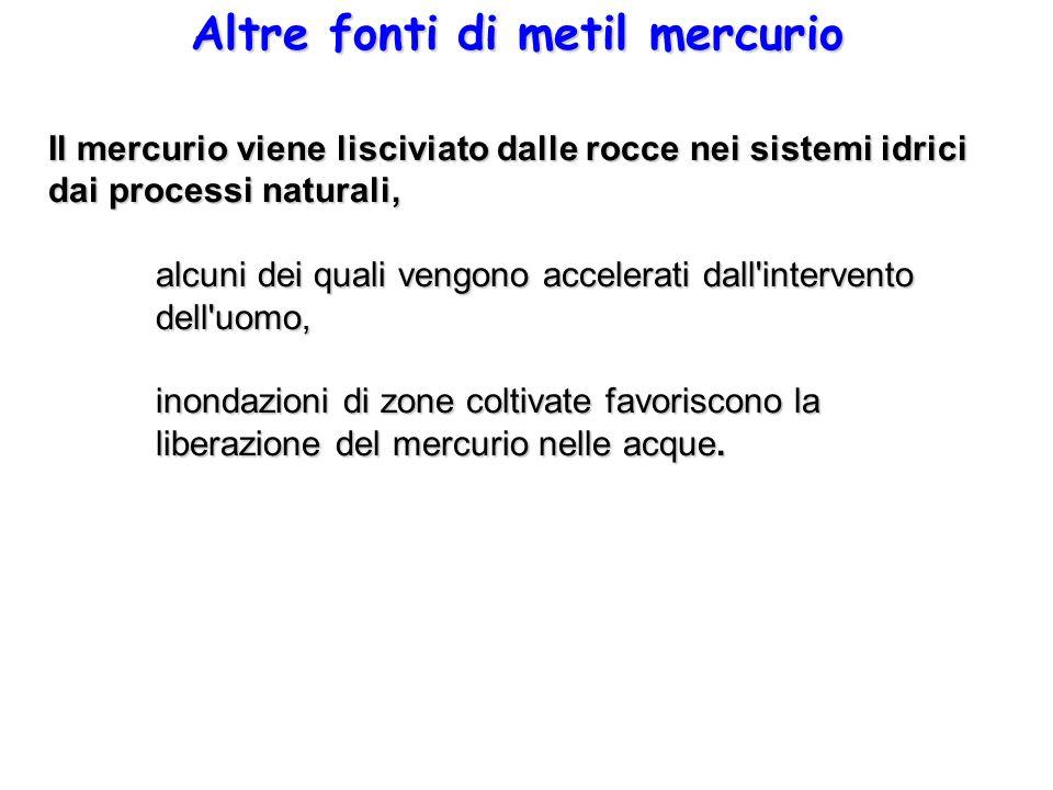 Altre fonti di metil mercurio Il mercurio viene lisciviato dalle rocce nei sistemi idrici dai processi naturali, alcuni dei quali vengono accelerati d