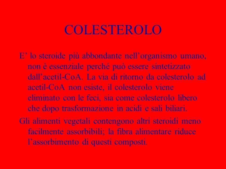 COLESTEROLO E lo steroide più abbondante nellorganismo umano, non è essenziale perché può essere sintetizzato dallacetil-CoA. La via di ritorno da col