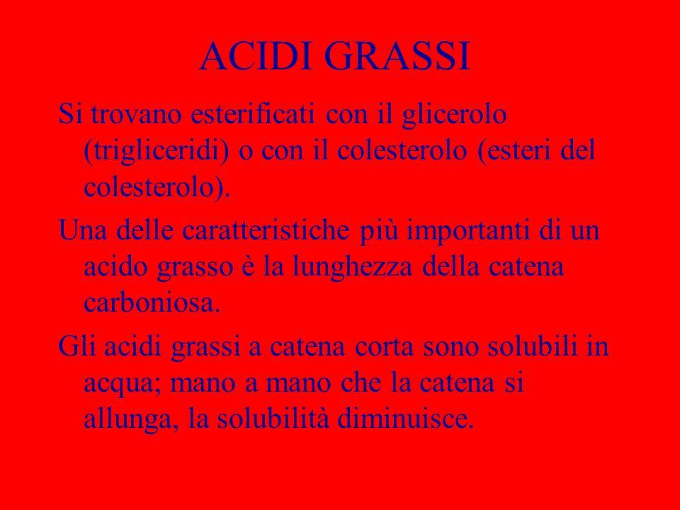ACIDI GRASSI INSATURI A volte gli acidi grassi contengono uno o più doppi legami; negli acidi grassi naturali i doppi legami sono sempre in posizione cis.