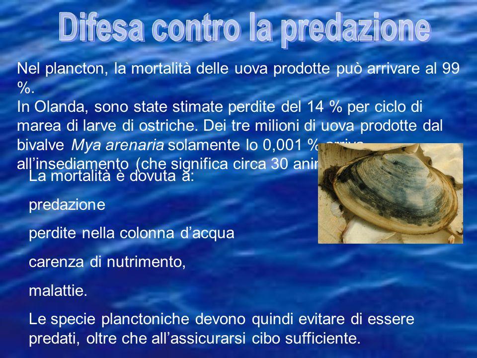Nel plancton, la mortalità delle uova prodotte può arrivare al 99 %. In Olanda, sono state stimate perdite del 14 % per ciclo di marea di larve di ost