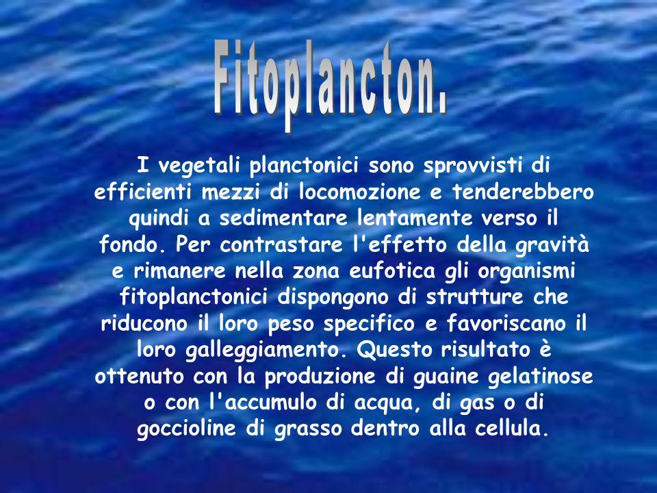 I vegetali planctonici sono sprovvisti di efficienti mezzi di locomozione e tenderebbero quindi a sedimentare lentamente verso il fondo. Per contrasta