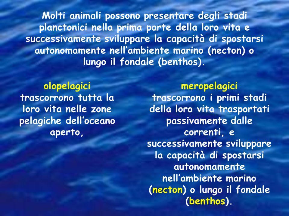 Molti animali possono presentare degli stadi planctonici nella prima parte della loro vita e successivamente sviluppare la capacità di spostarsi auton