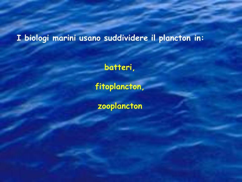 I biologi marini usano suddividere il plancton in: batteri, fitoplancton, zooplancton